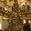 Capital Hotel's Christmas Tree