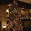 Peabody Christmas Tree